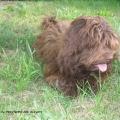 Fidelio w wieku 6 miesięcy