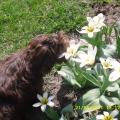 Fidelio zafascynowany kwiatami