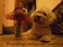 MIOT D/ LITTER D ur. 03-10-2012